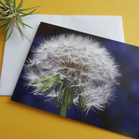 Get well card (blank inside) dandelion Wish - Bluebells