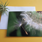 Get well card - Dandelion Wish