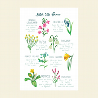 British wildflowers A4 print