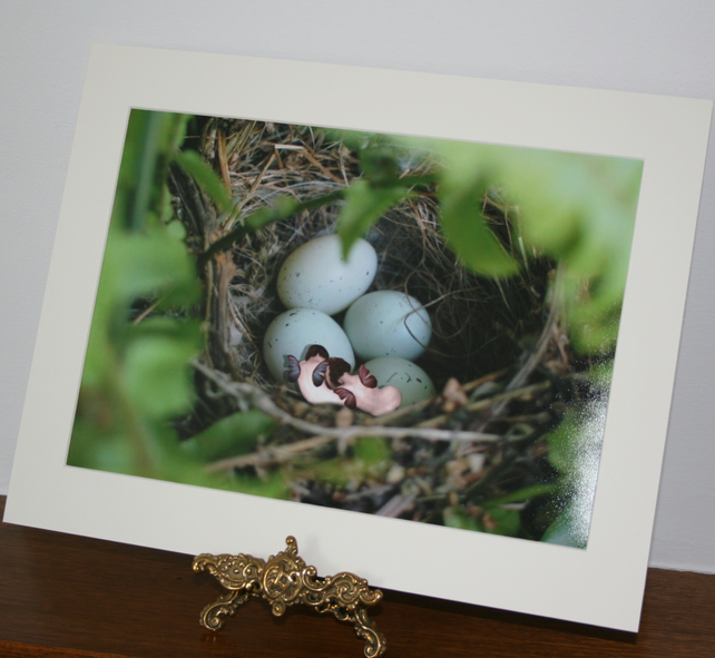 sale Ethereal Fairies sleeping in a nest  art Print