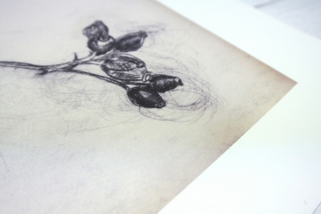 Rosehip Illustration in Drypoint Reproduction Print