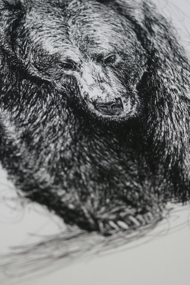 Grizzly Bear Pen and Ink Illustration A3 Print Limited Edition