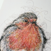 Robin Red Breast Pen and Ink Illustration 10x8 inch Limited Edition