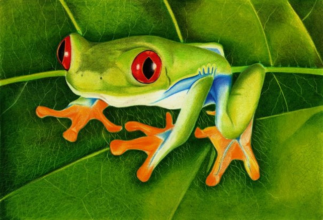 Red Eyed Tree Frog, Limited Edition Print