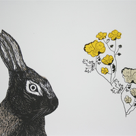 Hare and Buttercups