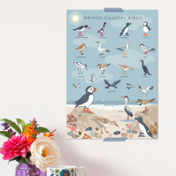 British Coastal Birds Poster - Field Guide Poster - A3 sized