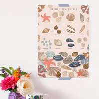 British Sea Shells Poster - Field Guide Poster - A3 sized