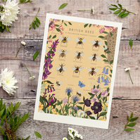 'British Bees and Pollinator Friendly Plants' Illustration Print A4 Unframed