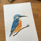 Kingfisher Watercolour illustration