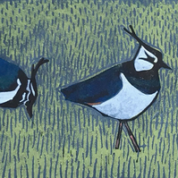 Lapwings on blue