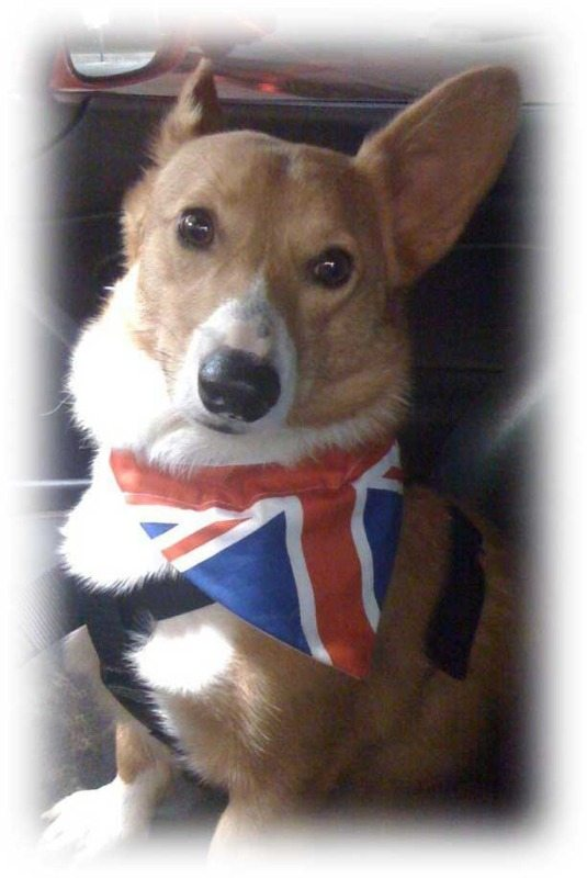 Union Jack Jubilee Olympic Dog And Cat Bandana Folksy