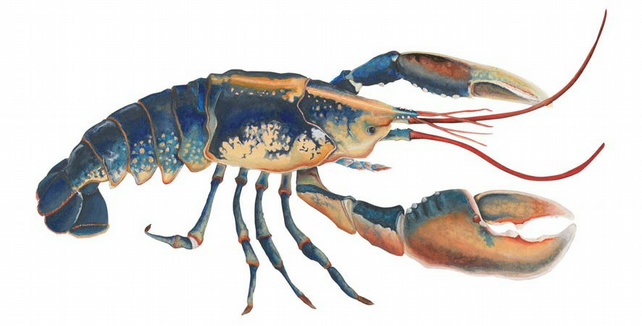 Lobster giclee print on watercolour paper