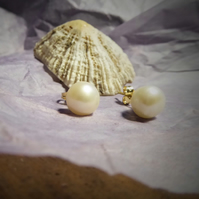 classic Pearls stud earrings in 18 ct yellow gold