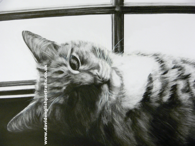A3 Commissioned Pet Cat Portrait from your photo in Graphite.