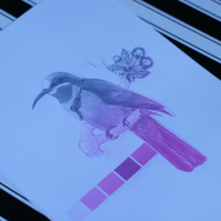 Pink Ombre Bird Collage Print (A5)