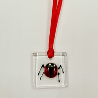 Fused glass ladybird decoration