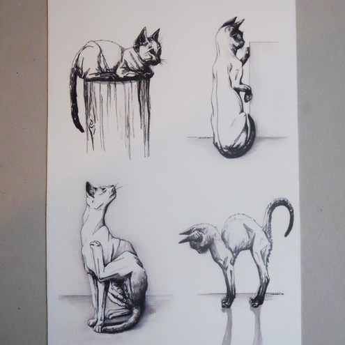 Cat sketches -  a study of 4 cats