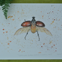 Beetle Giclee Art Print A4 Xylotrupes Gideon Insect Coloured Pencil Drawing