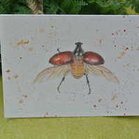 Beetle Greetings Card A6 Insect Nature Scientific Drawing Coloured Pencil