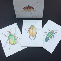 Beetle Card set Blank Greeting Card Art Card Museum Specimen Biology Entomology
