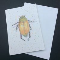 Card Blank Art Card With Beetle Illustration Gold Beetle Museum Specimen