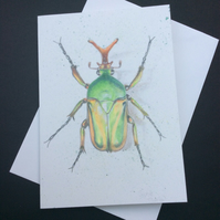 Beetle Card Blank Art Card Morgani White Beetle Bug Insect Card Fathers Day Scie