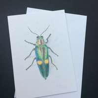 Beetle Card Blank Greetings Card Art Card Jewel Beetle Scientific Drawing