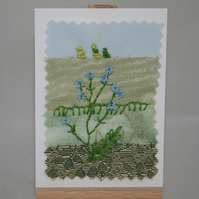 Chicory  - ACEO