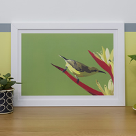 A Bird in the Grass Picture: Limited Edition A3 Digital Art Print