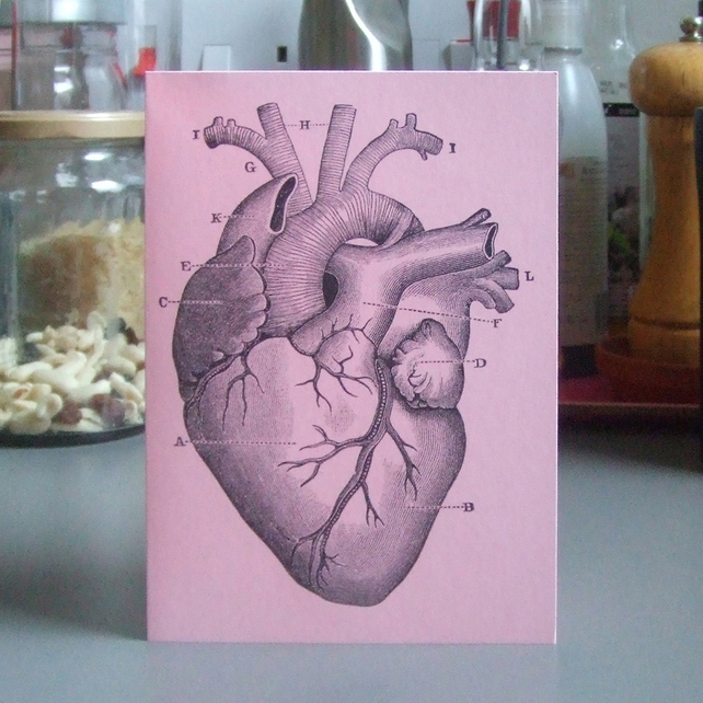 Related Pictures anatomy heart diagram