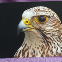 Gyrfalcon Greetings Card.