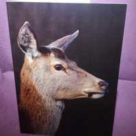 Deer Portrait Greetings Card