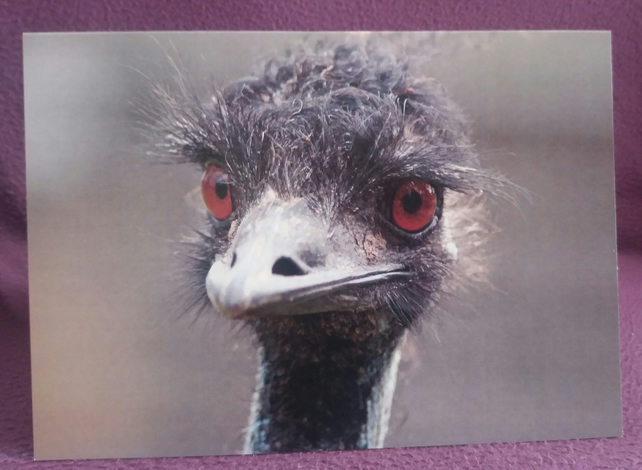 Emu Greetings Card