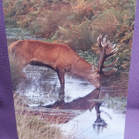 Set of 4 Wildlife Greetings Cards