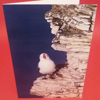 Bird singing on the cliff greetings card.