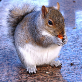 FAT SQUIRREL PHOTOGRAPHY