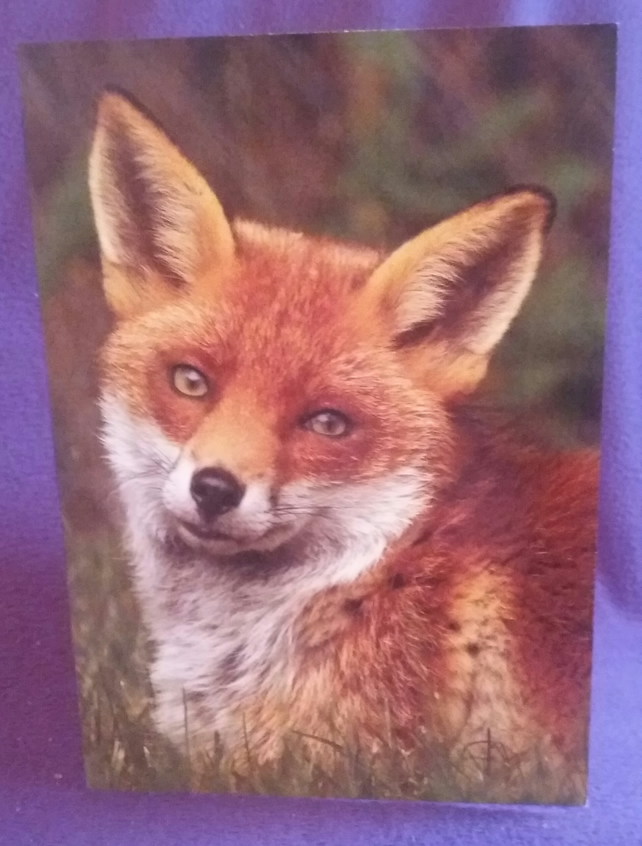 Red Fox Greetings Card