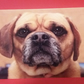 Dog Portrait Greetings Card