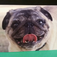 Pug Greetings Card