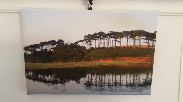 Tree Reflections in Devon. A canvas print.