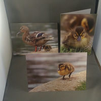 Set of 3 Duckling Greeting Cards