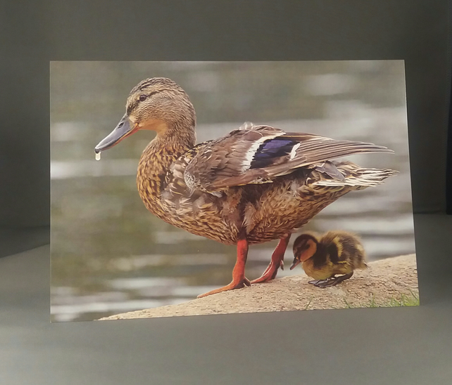 Easter Greetings Card. Little Duckling.