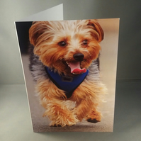 Happy running dog. Yorkshire Terrier. Blank inside. Any occasion card.