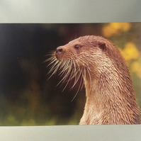Otter in the Sun Greetings Card