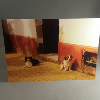Dogs in Seville Greetings Card
