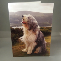 Sheepdog Greetings Card