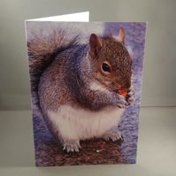 The Fat Squirrel Greetings Card. Blank inside.