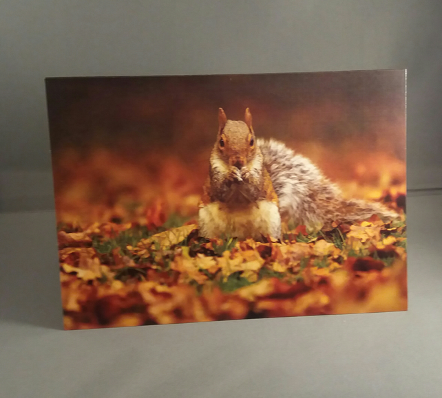 Squirrel in the Autumn Leaves Greetings Card