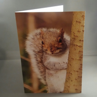 Peek A Boo Squirrel Greetings Card