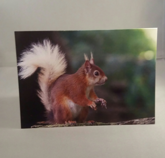 Red Squirrel Greetings Card